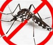 L'Ajuntament ha intensificat, des de fa mesos, els tractaments contra els insectes