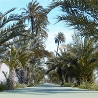 Carril bici zona Horts de les Palmes