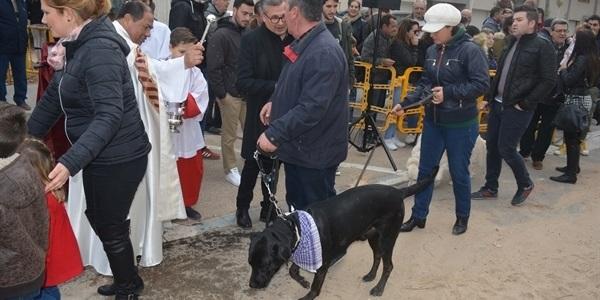 Festa de Sant Antoni. 2 de 2. Part final, gossos, gats i altres